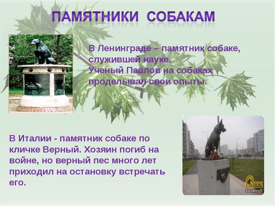 В Ленинграде – памятник собаке, служившей науке. Ученый Павлов на собаках про...