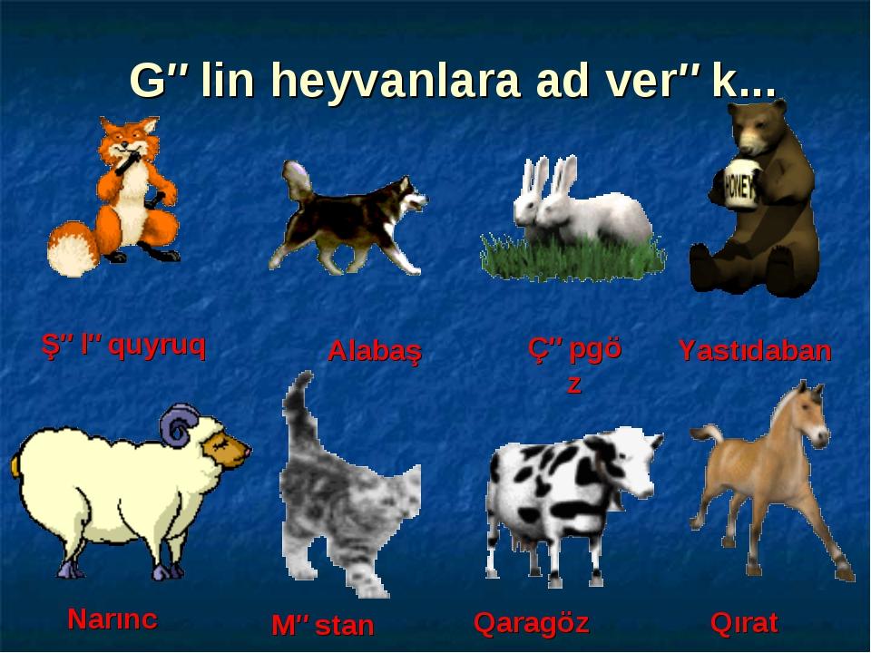 Gəlin heyvanlara ad verək... Alabaş Şələquyruq Qaragöz Qırat Məstan Narınc Çə...
