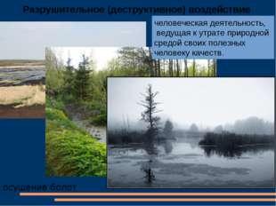 Разрушительное (деструктивное) воздействие осушение болот человеческая деятел