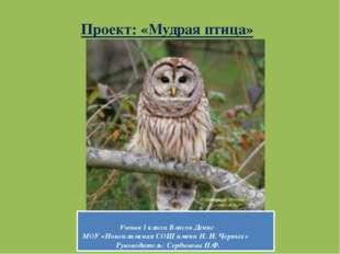 Проект: «Мудрая птица» Ученик 1 класса Власов Денис МОУ «Новоилимская СОШ име