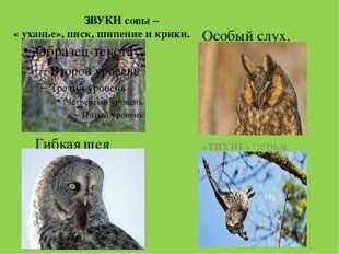 ЗВУКИ совы – « уханье», писк, шипение и крики. «ТИХИЕ» перья. Гибкая шея Осо