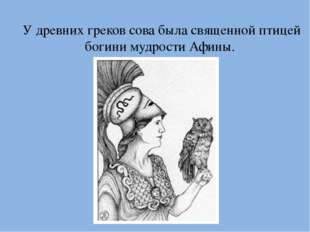 У древних греков сова была священной птицей богини мудрости Афины.