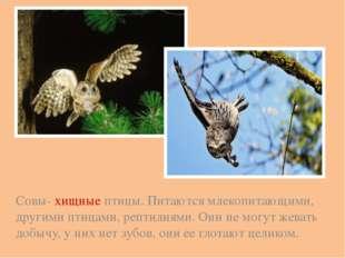 Совы- хищные птицы. Питаются млекопитающими, другими птицами, рептилиями. Они