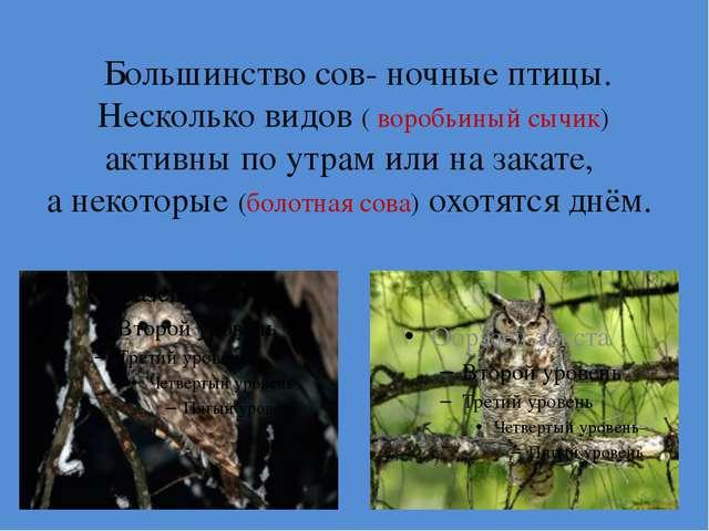 Большинство сов- ночные птицы. Несколько видов ( воробьиный сычик) активны п...