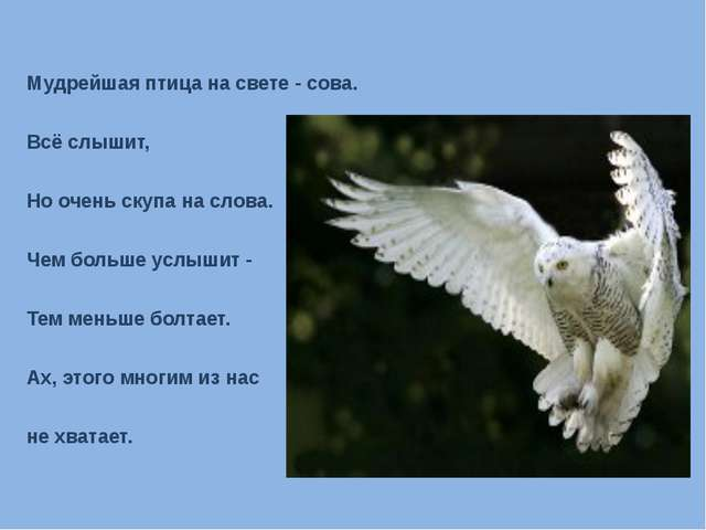 Мудрейшая птица на свете - сова. Всё слышит, Но очень скупа на слова. Чем бол...
