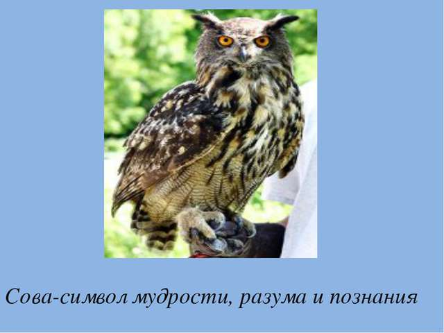 Сова-символ мудрости, разума и познания