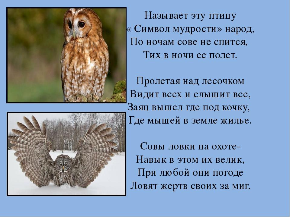 Называет эту птицу « Символ мудрости» народ, По ночам сове не спится, Тих в н...