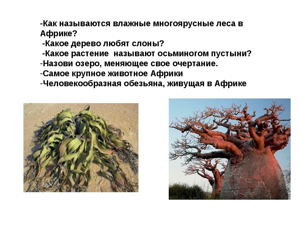 -Как называются влажные многоярусные леса в Африке? -Какое дерево любят слон...