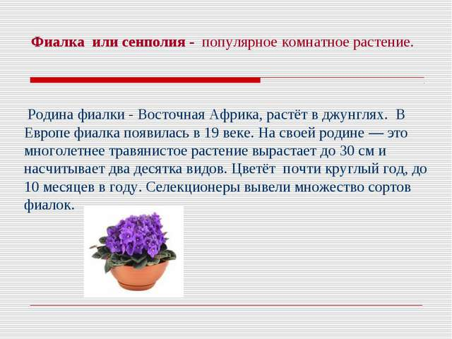 Фиалка или сенполия - популярное комнатное растение. Родина фиалки - Восточна...