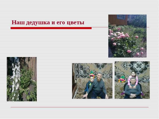 Наш дедушка и его цветы