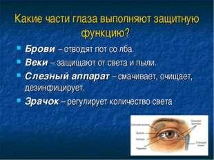 Какие части глаза выполняют защитную функцию? Брови – отводят пот со лба. Век