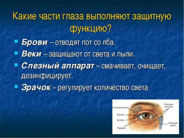Какие части глаза выполняют защитную функцию? Брови – отводят пот со лба. Век...