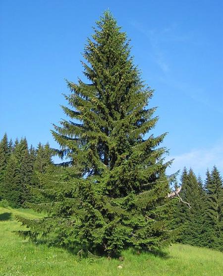 http://life-nature.ru/images/content/article/2011/01/21/el.jpg