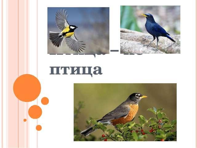 Птица – не птица