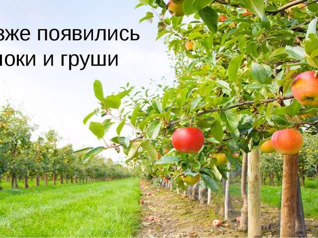 Позже появились яблоки и груши