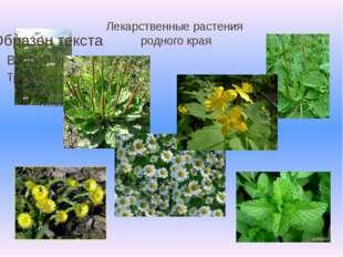 Лекарственные растения родного края