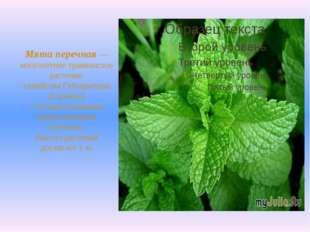 Мята перечная— многолетнее травянистое растение семейства Губоцветных (Labi