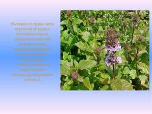 Вытяжки из травы мяты перечной обладают успокаивающими, спазмолитическими, ж