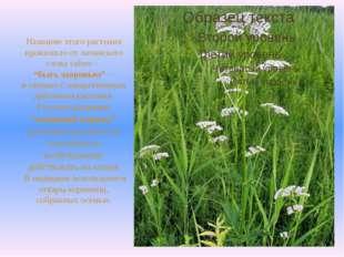 """Название этого растения произошло от латинского слова valere – """"быть здоровы"""