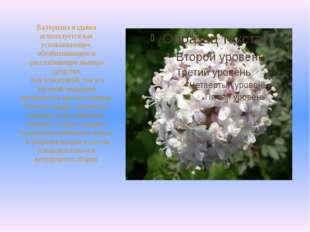 Валериана издавна используется как успокаивающее, обезболивающее и расслабляю