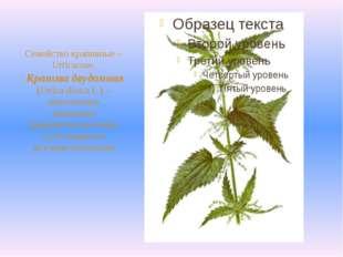Семейство крапивные – Urticaceae. Крапива двудомная (Urtica dioica L.) – мно