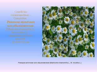 Ромашка аптечная или обыкновенная (Matricaria chamomilla L., M. recutita L.)