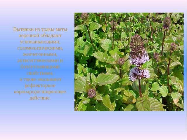 Вытяжки из травы мяты перечной обладают успокаивающими, спазмолитическими, ж...