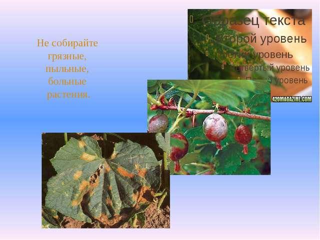 Не собирайте грязные, пыльные, больные растения.