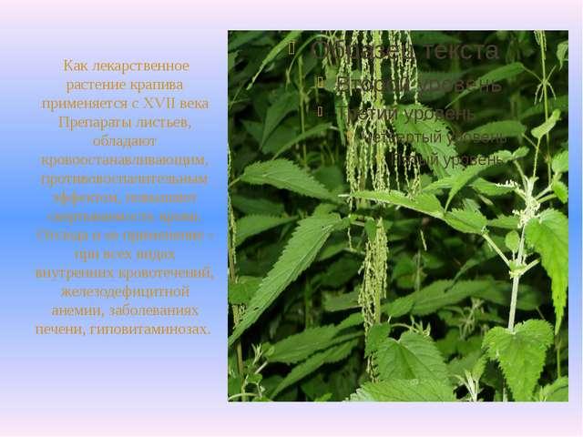 Как лекарственное растение крапива применяется с XVII века Препараты листьев...