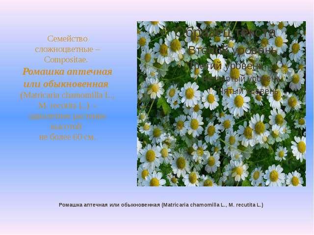 Ромашка аптечная или обыкновенная (Matricaria chamomilla L., M. recutita L.)...