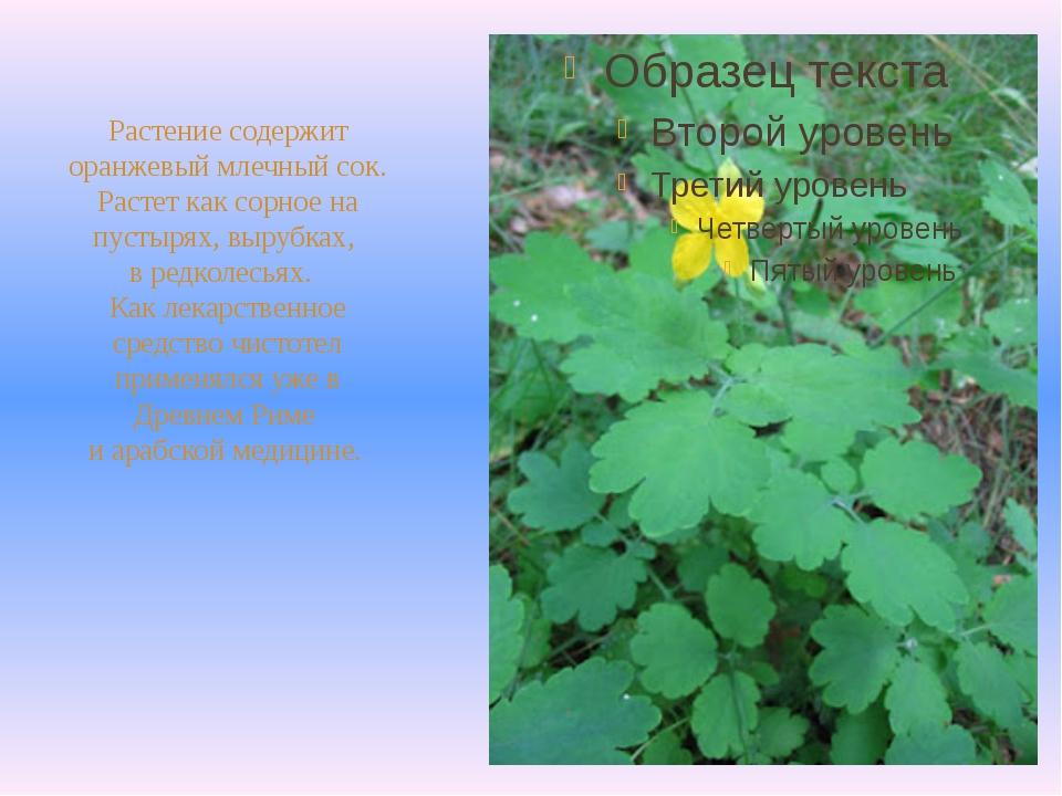 Растение содержит оранжевый млечный сок. Растет как сорное на пустырях, выру...