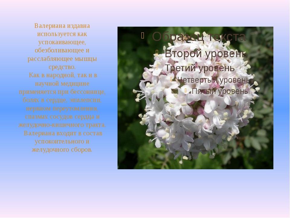 Валериана издавна используется как успокаивающее, обезболивающее и расслабляю...