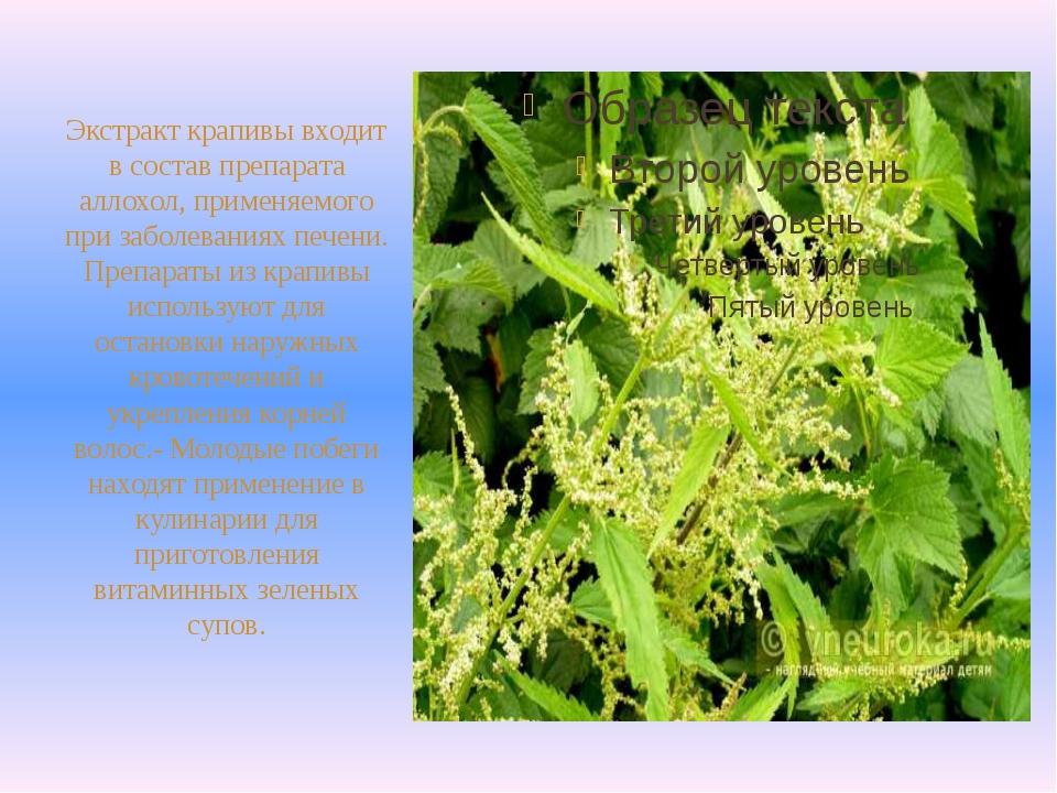 Экстракт крапивы входит в состав препарата аллохол, применяемого при заболев...