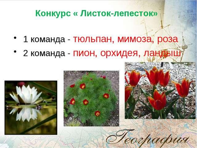 Конкурс « Листок-лепесток» 1 команда - тюльпан, мимоза, роза 2 команда - пио...
