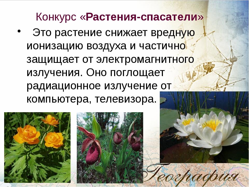 Конкурс «Растения-спасатели» Это растение снижает вредную ионизацию воздуха...