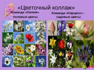 «Цветочный коллаж» Команда «Лилия»- полевые цветы Команда «Нарцисс» - садовые