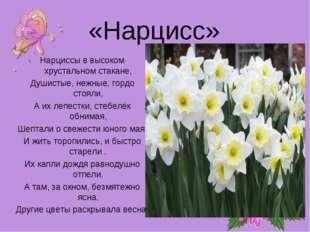 «Нарцисс» Нарциссы в высоком хрустальном стакане, Душистые, нежные, гордо сто