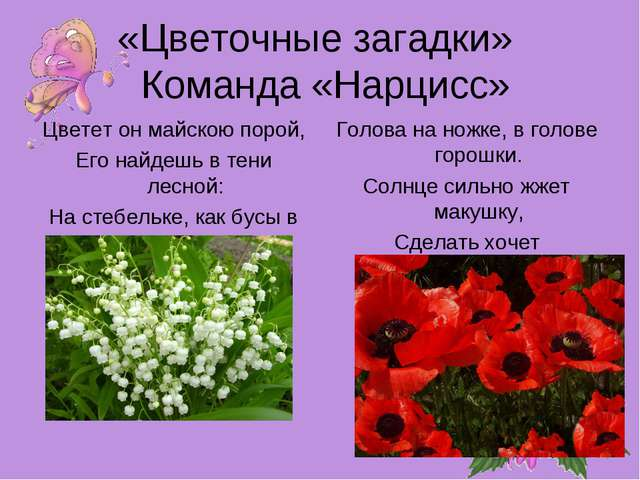 «Цветочные загадки» Команда «Нарцисс» Цветет он майскою порой, Его найдешь в...