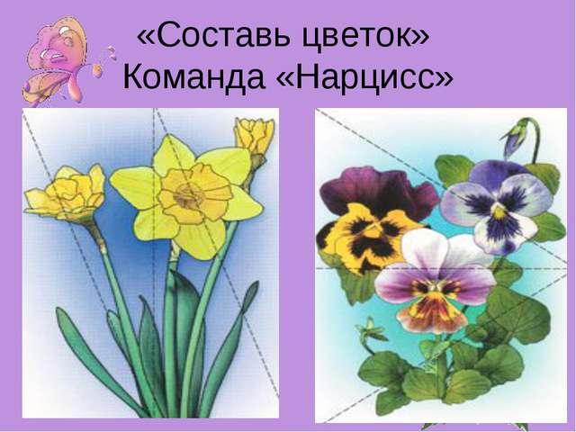 «Составь цветок» Команда «Нарцисс»