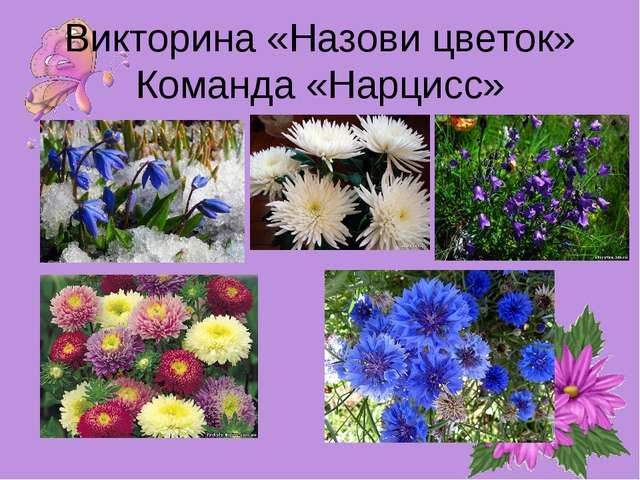 Викторина «Назови цветок» Команда «Нарцисс»