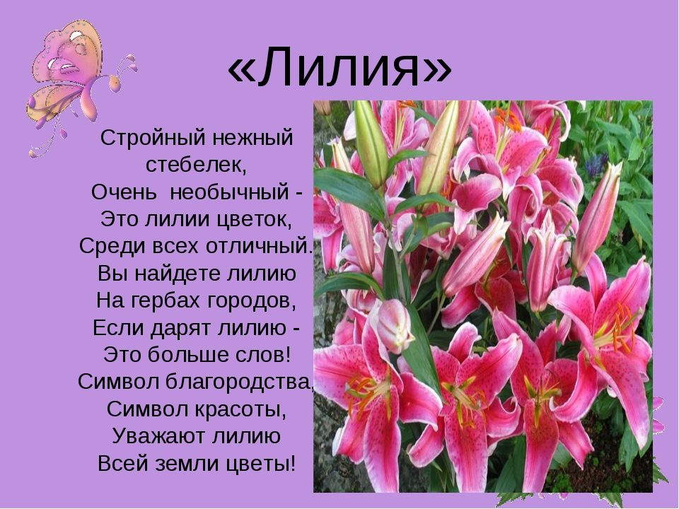 Короткий стих про лилию