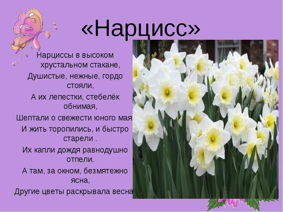 «Нарцисс» Нарциссы в высоком хрустальном стакане, Душистые, нежные, гордо сто...
