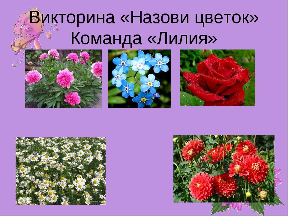 Викторина «Назови цветок» Команда «Лилия»