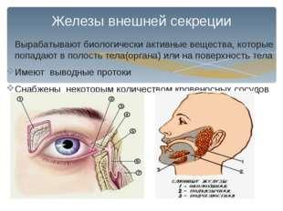Железы внешней секреции Вырабатывают биологически активные вещества, которые