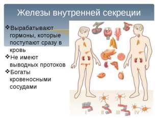Железы внутренней секреции Вырабатывают гормоны, которые поступают сразу в кр