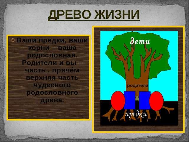 ДРЕВО ЖИЗНИ Ваши предки, ваши корни – ваша родословная. Родители и вы – част...