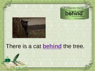There is a cat behind the tree.