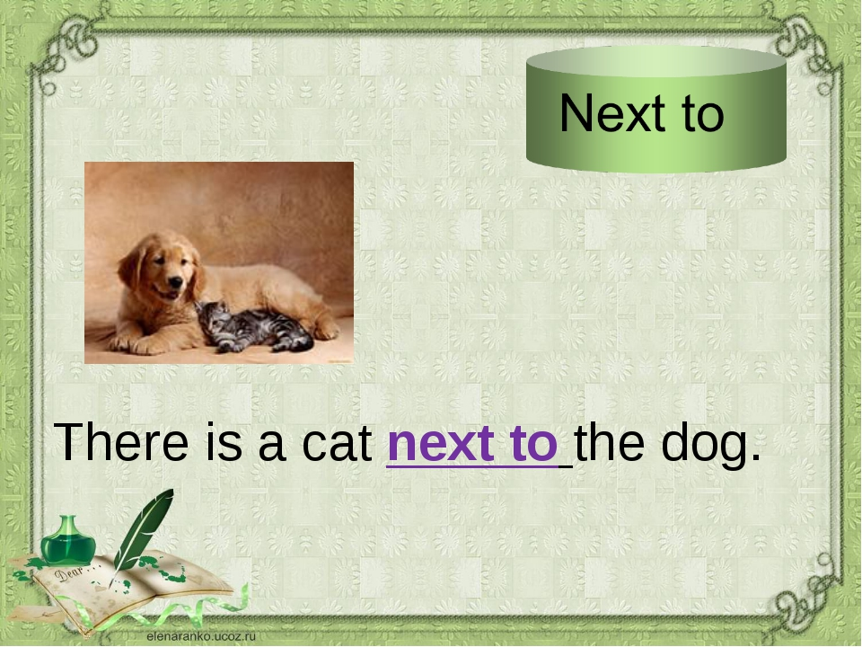 There is a cat next to the dog.