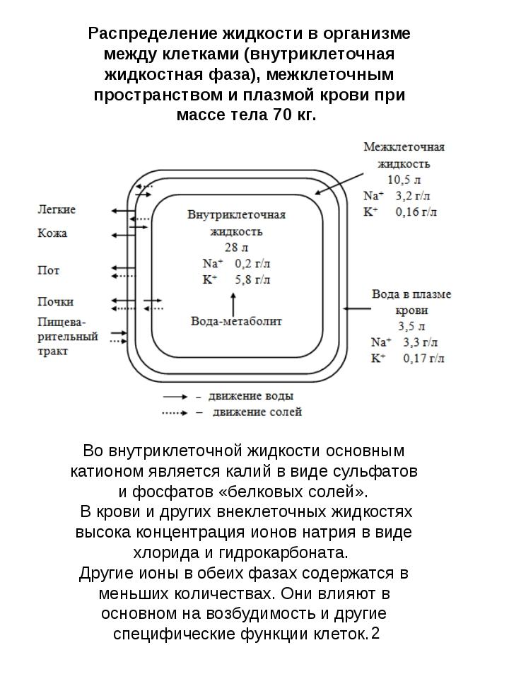 Во внутриклеточной жидкости основным катионом является калий в виде сульфатов...