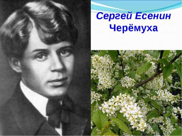 Сергей Есенин Черёмуха